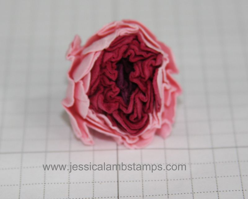 Petals squished front view